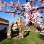 Primavera en Salinas (3)